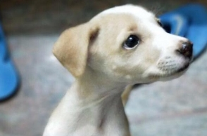 TN College student throws puppy off roof, kills it