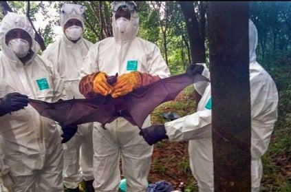 Nipah update: Fruit bats didn't carry the virus