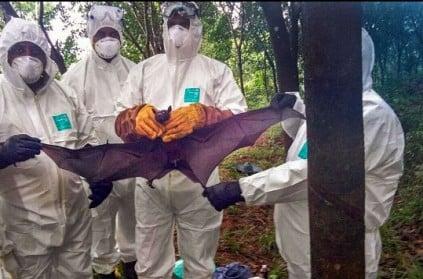 Nipah update: Fruit bats didn\'t carry the virus.
